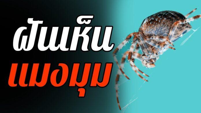 ทำนายฝัน ฝันเห็นแมงมุม เลขเด็ด ฝันเห็นแมงมุม แม่นๆ