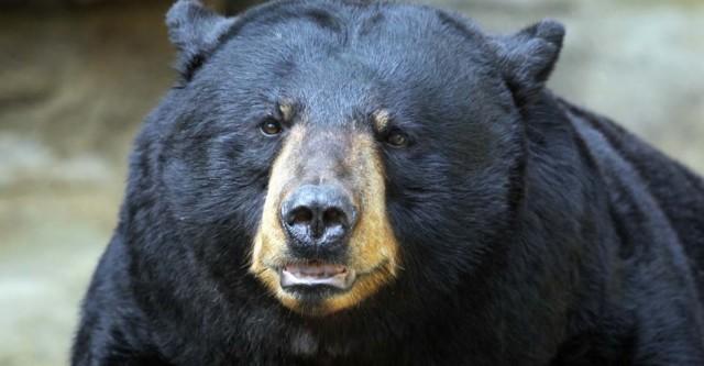 ทำนายฝัน ฝันเห็นหมี เลขเด็ด ฝันเห็นหมี แม่นๆ