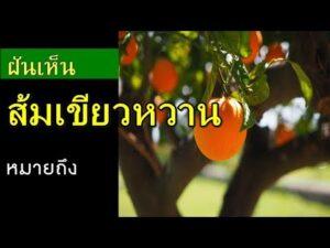 ทำนายฝัน ฝันเห็นส้มเขียวหวาน เลขเด็ด ฝันเห็นส้มเขียวหวาน แม่นๆ
